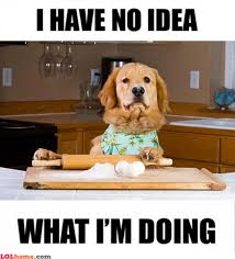 Funny Cooking Memes - cooking dog funny pic