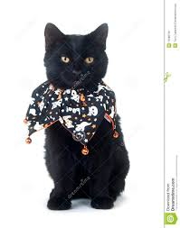 black cat halloween background cute black cat in halloween bib royalty free stock photos image