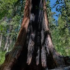 calaveras big trees cbtassociation