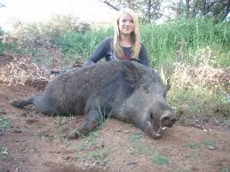 Hog Hunting Memes - girl hog hunting meme hog best of the funny meme