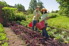 Chicago Botanic Garden Internship Gardeners Can Harvest Quite A Crop From Small Spaces