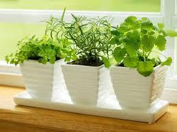 diy indoor herb garden ideas frugal village