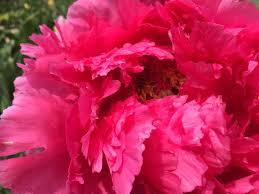 why flowers need winter u2013 uwmadscience