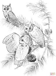 perched screech owls coloring page free printable coloring pages