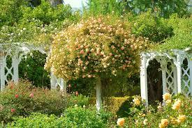 full size of uncategorizedcool flower garden hd wallpaper luxus