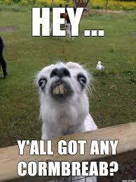 Llama Meme - cornbread llama meme on imgur