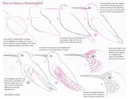 bird sketching tutorials