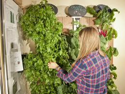 Indoor Vertical Gardening - freestanding garden tower provides green space for 50 plants to