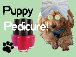 puppy pedicure clip file polish pups nails diy dog grooming by