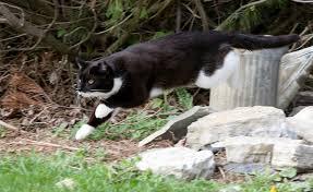 Barn Cat Names Barn Cats Rock Home Facebook