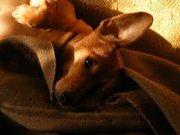 how to relax anxious dogs pethelpful
