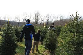 christmas tree hunting at hidden pond tree farm nj gone travel