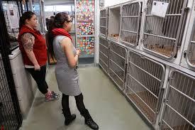 baker polito review animal shelter standards