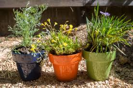 Brighten Up Your Balcony Or Patio With A Diy Native Plant Garden