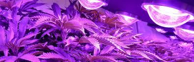 cob grow lights cob led grow light supplier usa u0026 canada