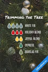 best 25 douglas fir tree ideas on pinterest douglas fir tree