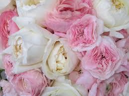 The Pink Peonies by Light Pink Wedding Dandelions Flowers U0026 Gifts