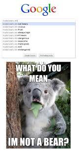 Koala Bear Meme - koala memes breaking the internet with cuteness