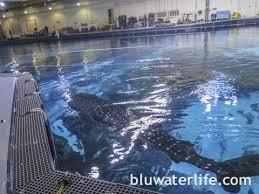 Georgia Aquarium Floor Plan Georgia Aquarium Whale Sharks