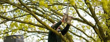yakima tree service arborists for pruning trimming