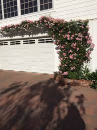 garden inspiration u2013 ventura county rose society