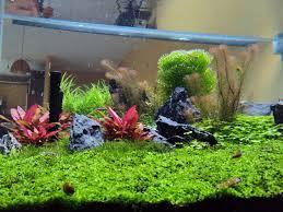 best led light for planted tank how good is orphek s planted tank spectrum orphek