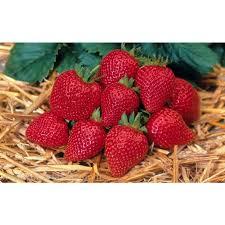 fruit edibles delizz strawberry ruby strawberry patio strawberries