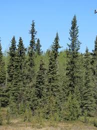 tiny trees 1 gail garber designs