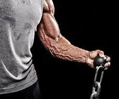 Best Forearm - forearm workout plan exercise com