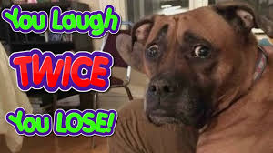 Videos Title You Laugh Twice You Lose Try Not To Smile Challenge If You Dare