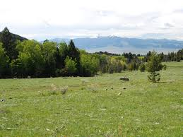 Acreages For Sale by Peterson Creek Elk Haven Sold Swan Land Company