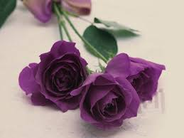 White Rose Bedroom Wallpaper Purple Roses Rose Tattoos And The On Pinterest Pictures Wallpaper