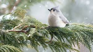 join the christmas bird count audubon