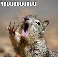 Squirrel Meme - squirrel memes