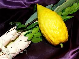 sukkot supplies lessons from the four species and sukkah in our relationships with