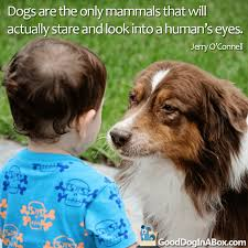 australian shepherd quotes dog quotes jerry o u0027connell good dog in a box