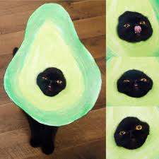 halloween cat meme avocato u0027 is this year u0027s best cat halloween costume the daily dot
