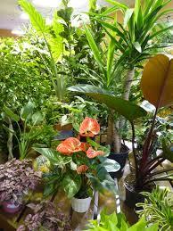 indoor plants at westbrae