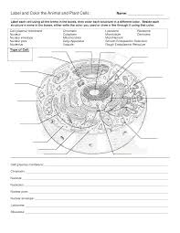 cell label worksheet free worksheets library download and print
