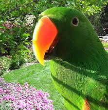 uv light for birds blog proper lighting for parrots