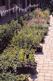 california native plant garden pacific horticulture society native plant care
