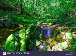 deep forest green beautiful tropical rainforest waterfall in deep forest phu