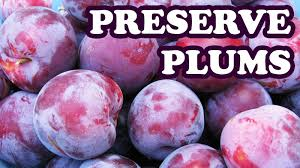 how to freeze preserve plums fruit preserves ripe plum