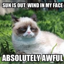 Grumpy Kitty Meme - do these grumpy cat memes make you laugh playbuzz