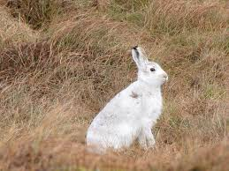 plants native to scotland 10 native scottish animals and where to find them