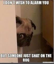 Funny Cute Animal Memes - cute dog meme w630