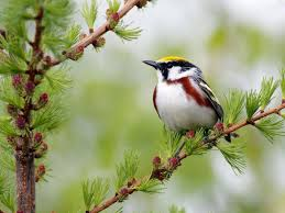 download nature wallpaper with birds gallery