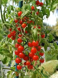 sensational container vegetable garden decorating ideas gallery in