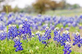 east texas native plants gardening in texas part 1 build your garden with texas natives
