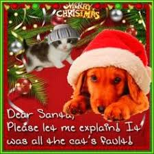 bet you can u0027t beat this holiday card dog holidays and card ideas